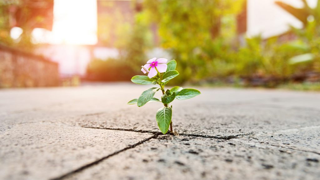 A flower blooming through the concrete